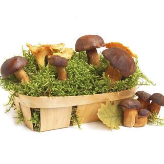 Răsaduri ciuperci 1+1 gratis