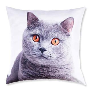 Față de pernă decorativă Pisică britanică
